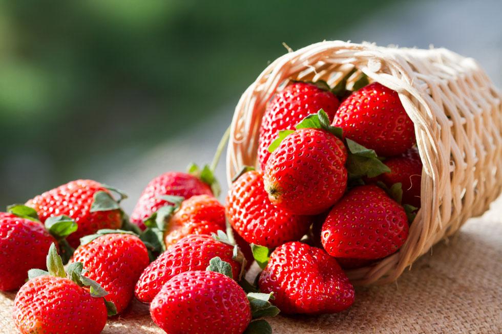 Befreundet sich mit Erdbeeren
